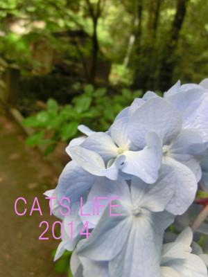 Cimg9683